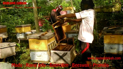 royal jelly ngawi, jual royal jelly dingwi, beli royal jelly dingawi, produsen royal jelly ngawi, suplier royal jelly ngawi