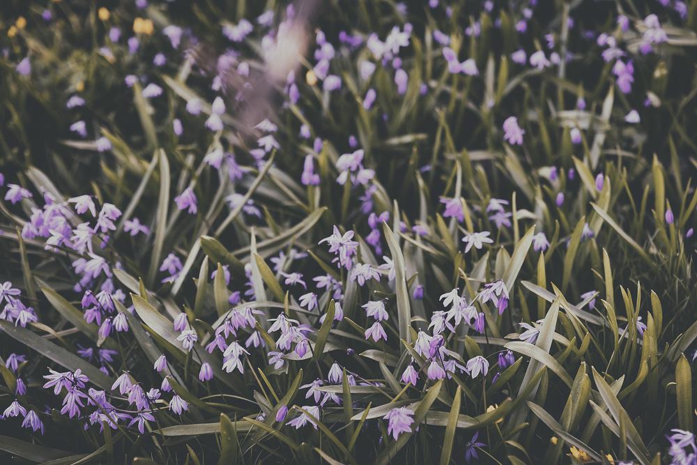 Helsinki, Finland, outdoorphotography, streetphoto, streetphotography, valokuvaus, Visualaddict, valokuvaaja, Frida Steiner, katuvalokuvaus, Kaivopuisto, visitfinland, spring, kevät, kukat, kukkia, flowers