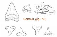 bentuk gigi ikan hiu