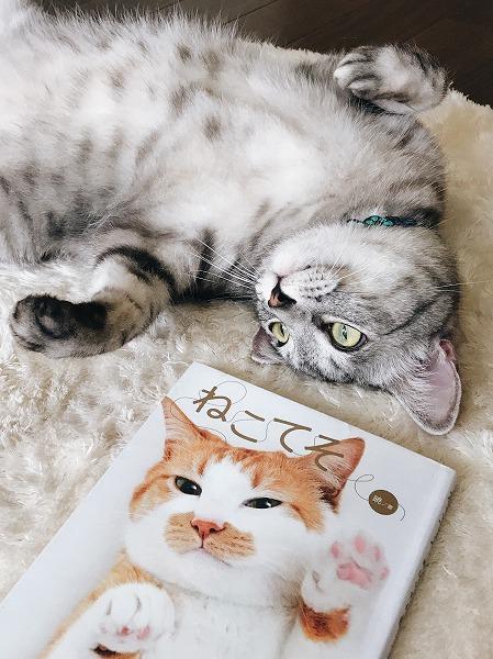 猫の手相本「ねこてそ」と寝っ転がってるサバトラ猫