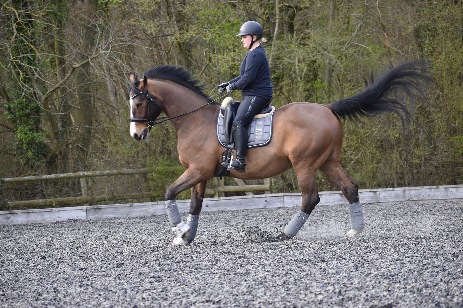 Roosa's Horsey Life: April 2019