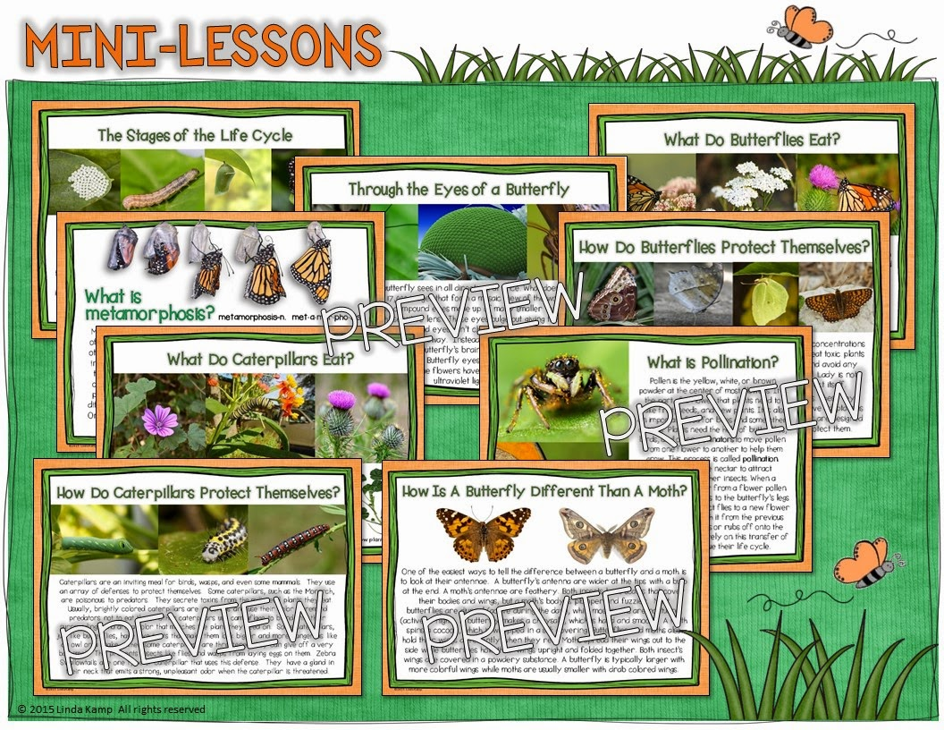 Get Butterfly Life Cycle Activities Amp Free Printables For Your Classroom