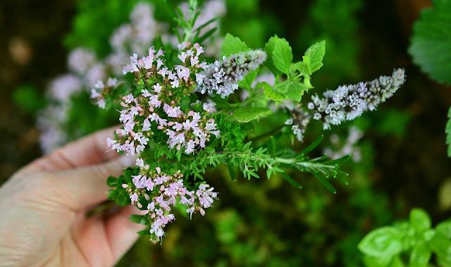 Jak dbać o ogródek ziołowy?