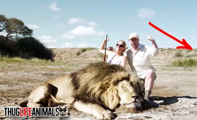 Lion Takes Absolutely BRUTAL Revenge On Big Game Hunger