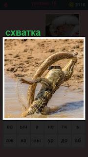 происходит схватка крокодила со змеей на берегу около воды