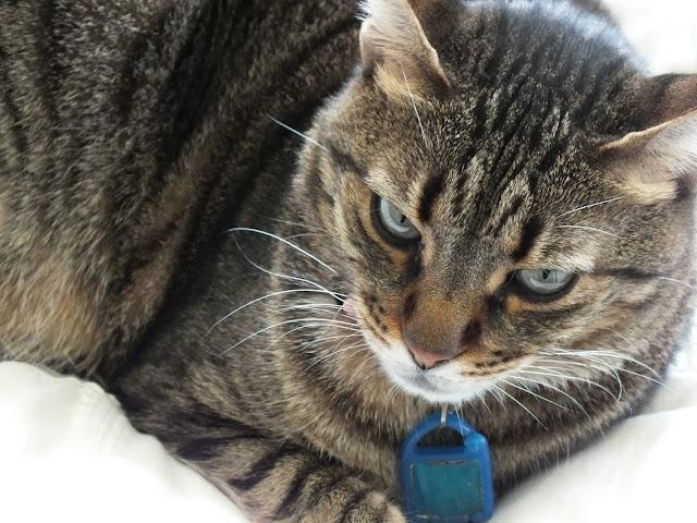 פרודנס החתולה גם רוצה פלאנר של ארין קונדרן