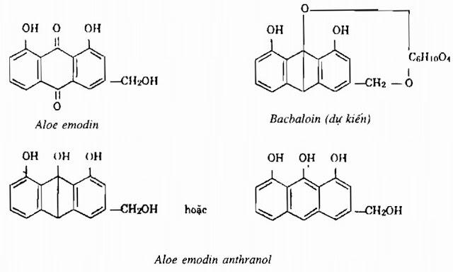 Thành phần hóa học Lô Hội - Aloe sp - Nguyên liệu làm thuốc Nhuận Tràng và Tẩy