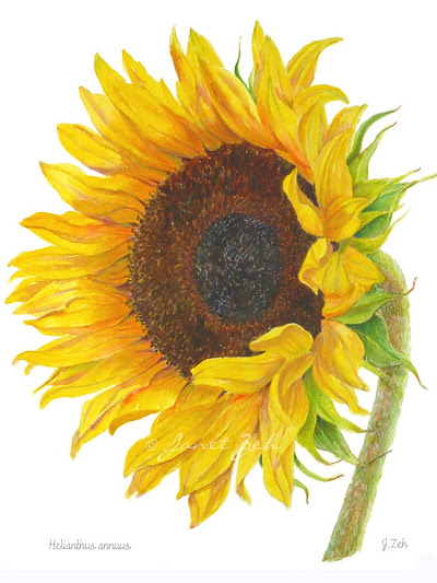 sunflower yellow flowers print