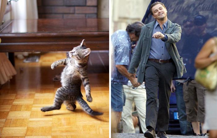 Gato no melhor estilo de Leonardo DiCaprio