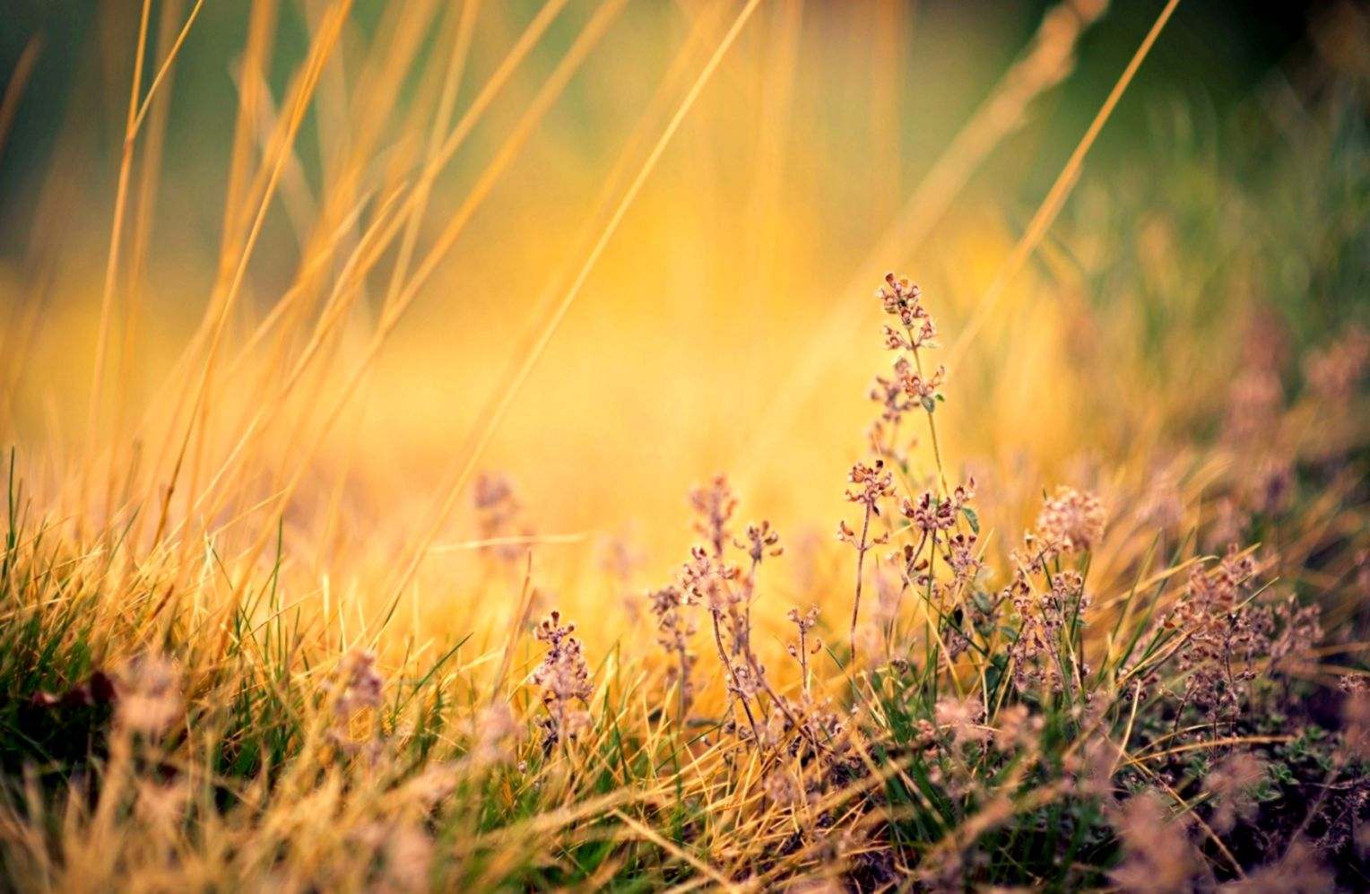 Nature Morning Grass Plants Flowers Hd Wallpaper Wallpapers