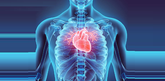 5 Amazing Facts About The Human Heart