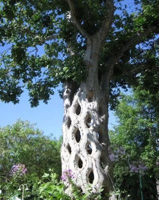 Pohon Sirkus, Amerika Serikat