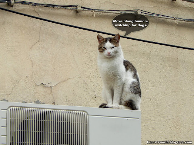 Watcher Cat