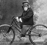 Monkey on a bicycle