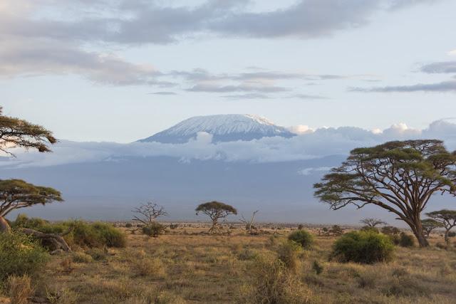 Es macht süchtig, Safari in Afrika