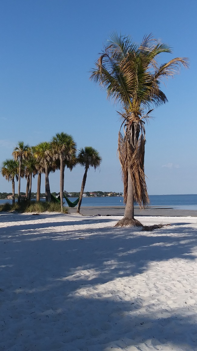 Vinoy Park Beach, St. Petersburg, FL
