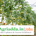 SRF Recruitment Agriculture /Horticulture /Forestry/ Allied Sciences-NBPGR Shimla