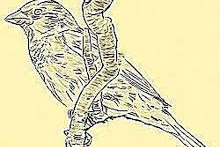 Bird Watching Journals - Preserve Your Bird Watching Experiences