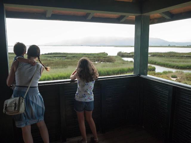 Avistando pájaros en el Delta del Ebro