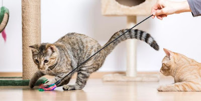 Cara Menghentikan Kucing Anda dari Menolak Anak Kucing Baru