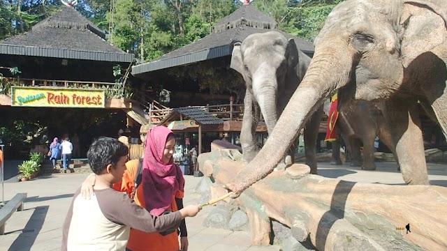 Asiknya Menginap di Safari Lodge Caravan dan Bermain di Taman Safari Indonesia - Hari Kedua