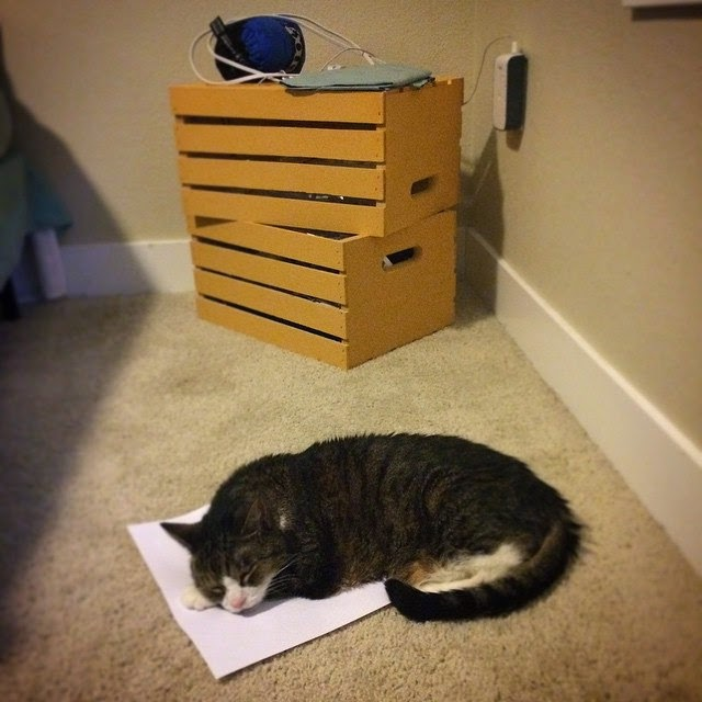 cat with paper