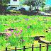戸畑菖蒲祭り後の宴