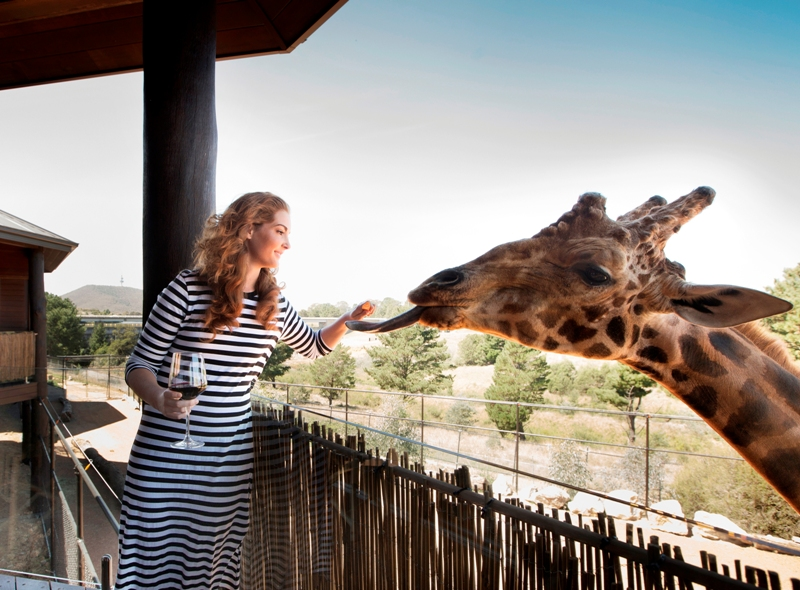 australia tourism canberra jamala wildlife lodge safari experience