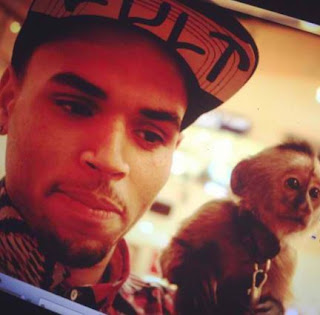 Pet Monkey: Sensational Singer Chris Brown In Trouble
