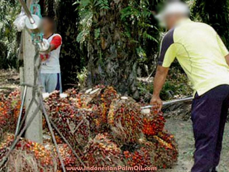 lawan kampanye negatif produk kelapa sawit