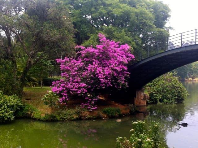 Parque Ibirapuera - Ponte de Ferro
