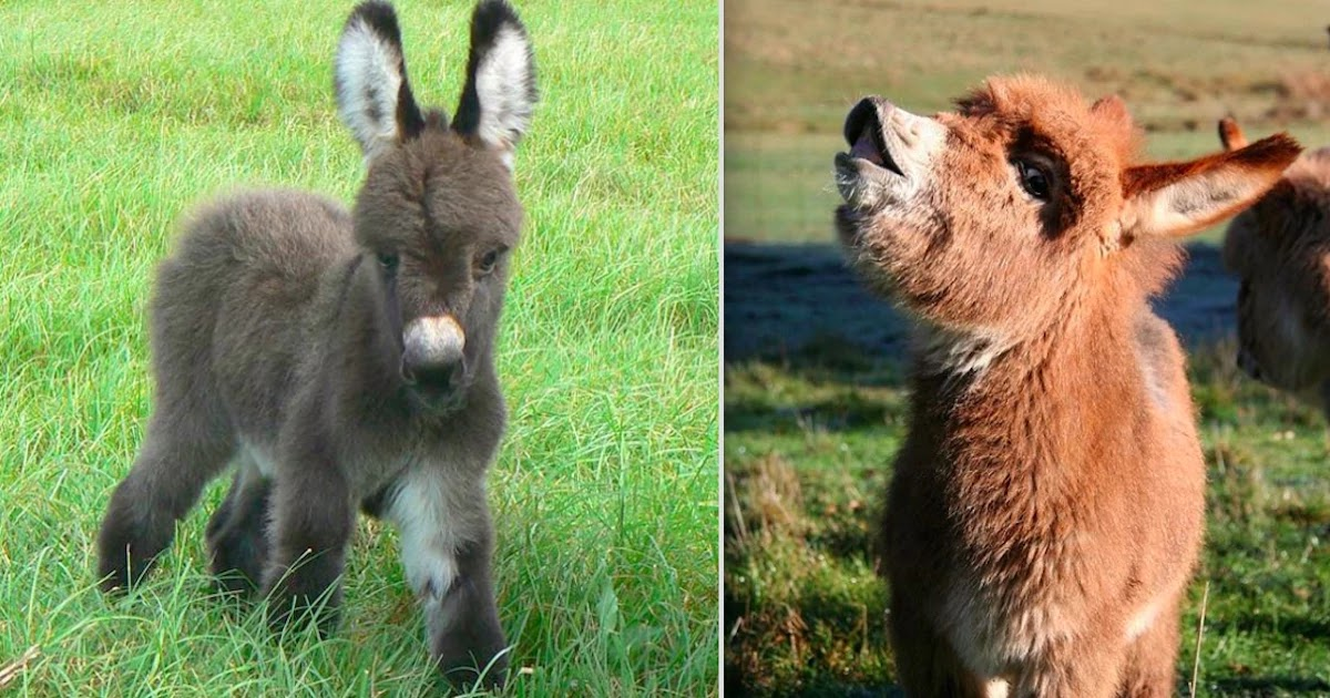 31 Pictures Of Baby Donkeys That Will Make Your Day!