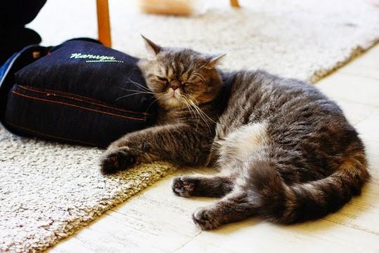 Thaland Purr Cat Café