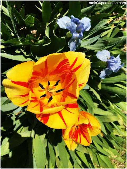Flores Primavera 2016