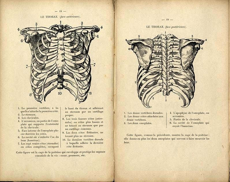 "Research of Artistic Anatomy: Charles Rochet ""PETIT ATLAS D\'ANATOMIE ..."