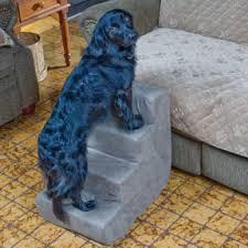 cão subindo no sofá