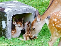 New fawns