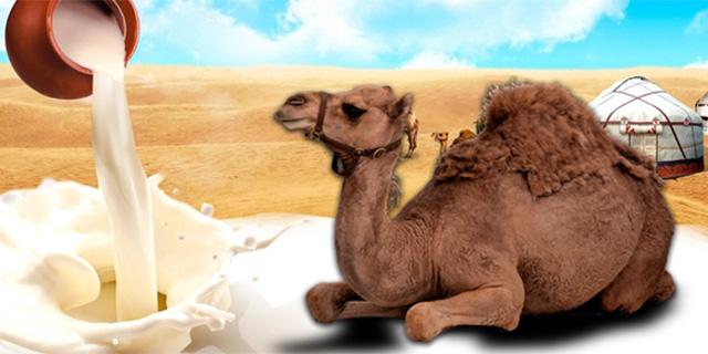 deve sütünün faydaları,deve sütünün faydaları nelerdir, Www.KahveKafe.Net