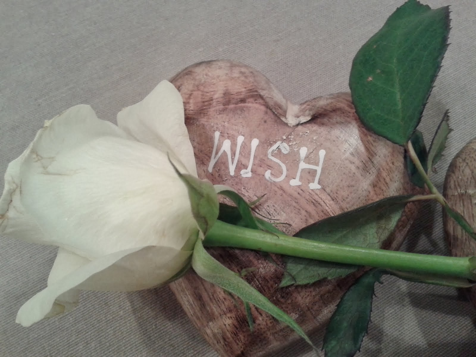 White rose and a wish...
