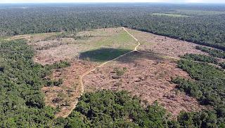 PF desarticula quadrilha especializada em desmatamento e grilagem no PARÁ