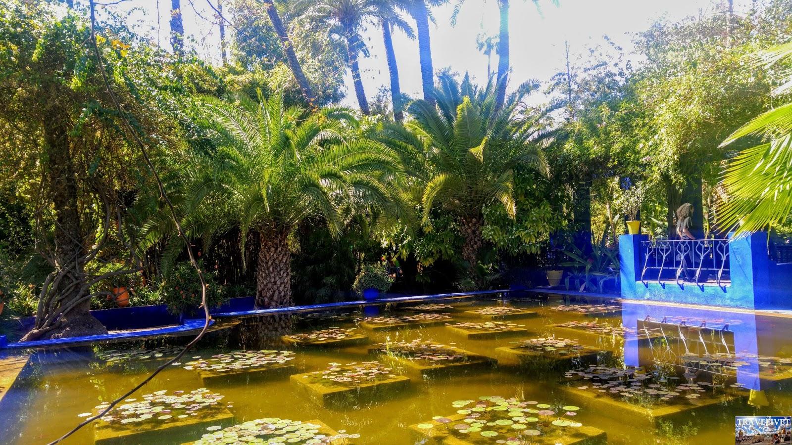 Maroc Marrakech Les Jardins de Majorelle