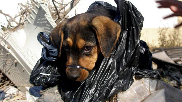Encuentran a una perrita en una bolsa de basura con una brida en el hocico