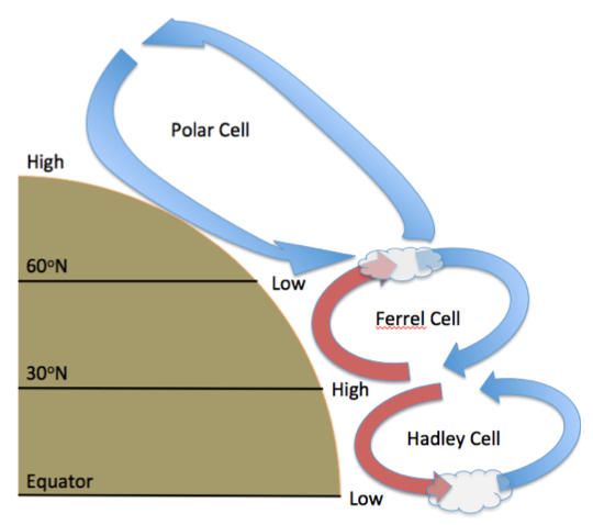 where do ferrel and hadley cells meet