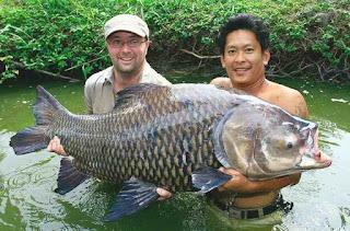 Umpan-Ikan-Tombro
