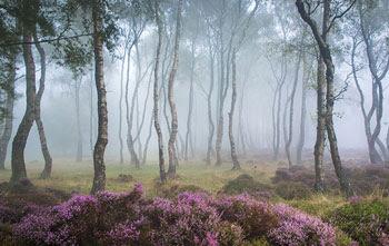 Gambar Hutan Terindah di Dunia 9