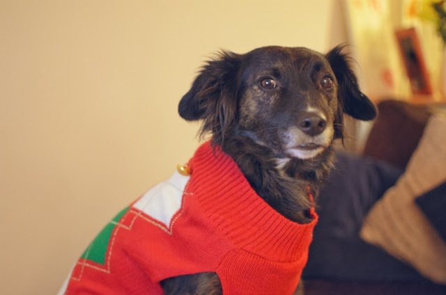 Pet-Christmas-jumpers