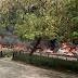 20 vehicles burnt as tanker explodes on Festac bridge, Lagos (Photos)