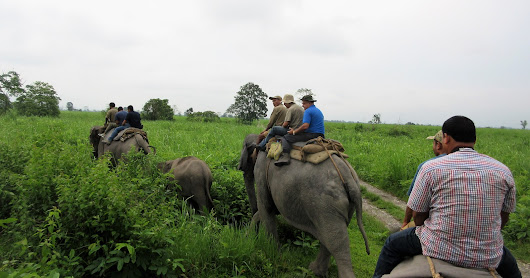 Rhino search operation team at Manas Recent