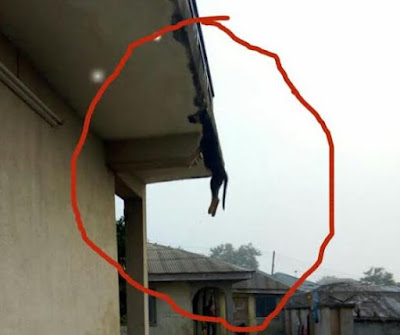 Chai! A Landlord in Lagos State sentenced Tenant's Dog to Death by Hanging (See Photos)
