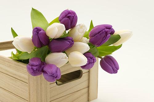 Если вы находитесь в России, то вы заметите, как мужчины 6-8 марта покупают много цветов (по традиции это тюльпаны)